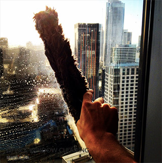 World Glass Window Cleaning Amp Pressure Washing In Seattle